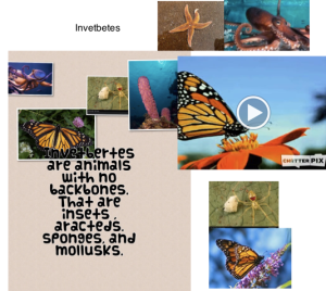 Student's page on invertebrates